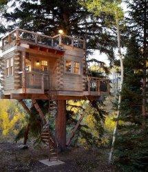 Image Casuta construita in copac